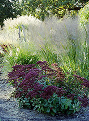 Grassland Gardens - Kansas Ornamental Grasses