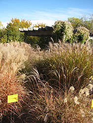 Fall Grasses at Pergola